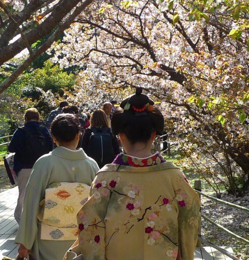 ninnaji temple-maiko