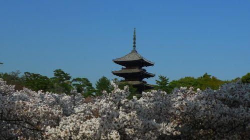 ninnaji temple-pagoda