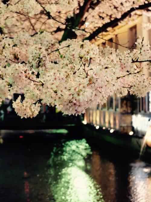 takasegawa sakura