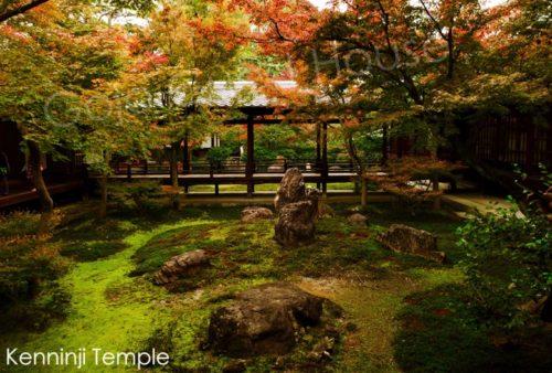 kenninji temple, autumn, kyoto
